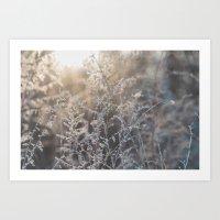 Frosty Foliage in Morning Light #3 Art Print