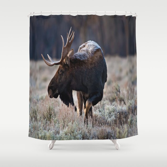 Moose Shower Curtain By Aka99