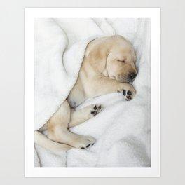 Sleeping Golden labrador puppy Art Print