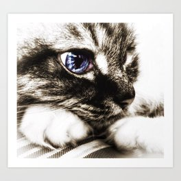 Hello there, Blue Eyes.. Art Print