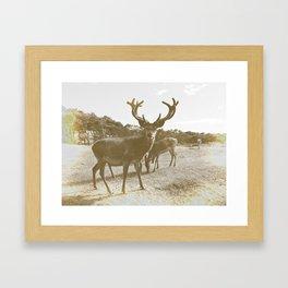 Deer Family Framed Art Print