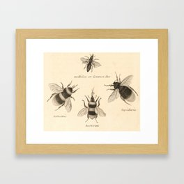 Naturalist Bees Framed Art Print