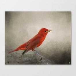 Song of the Summer Tanager 2 - Birds Canvas Print