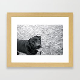 hank! Framed Art Print