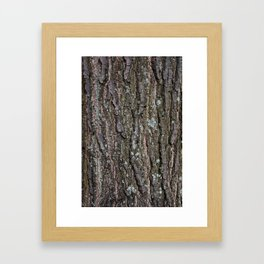 Tree Bark I Framed Art Print