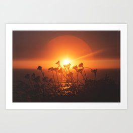 Sunsets and Weeds Art Print