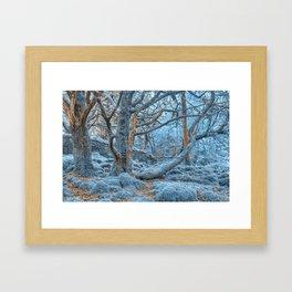 Sapphire Forest Framed Art Print