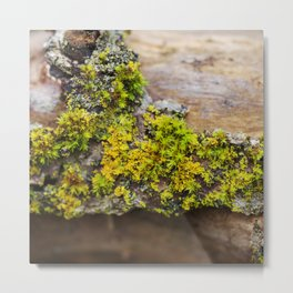 Moss on a Fallen Tree Metal Print