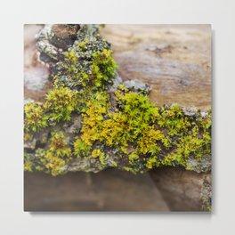 Moss on a Fallen Tree Metal Print