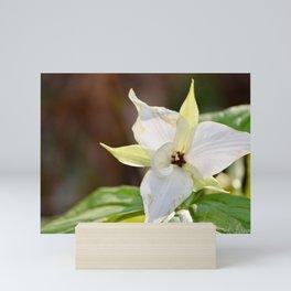 Fading Trillium in the Smoky Mountains Mini Art Print