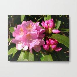 Rhodedendron Flower Metal Print