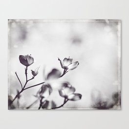 Black and White Floral Dogwood Photography, Grey Spring Flower Tree Branches, Gray Neutral Nature Canvas Print