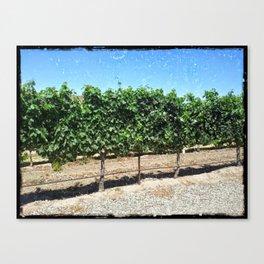 Santa Barbara Vineyard Canvas Print