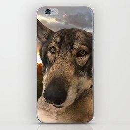 Dog German Shepherd and Sunset iPhone Skin