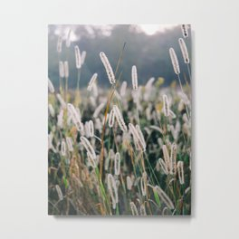 Whimsical Tall Grass Nature Field Landscape Photo Metal Print
