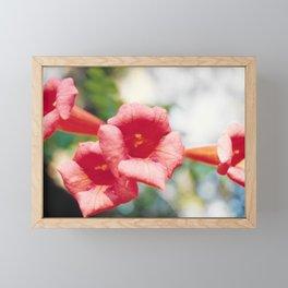 Trumpet flower Framed Mini Art Print
