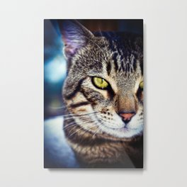 Bengal Tom Tabby Cat Portrait Metal Print