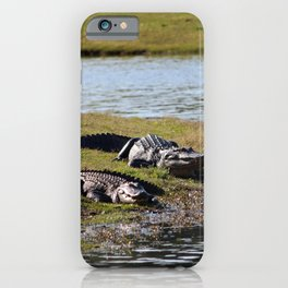 Big And Huge Alligators iPhone Case