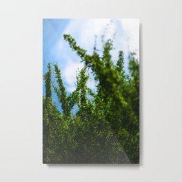 crisp Metal Print