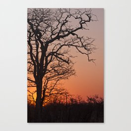 Skeleton tree in an African sunset Canvas Print