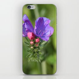 Viper's bugloss blue and pink flowers 2 iPhone Skin