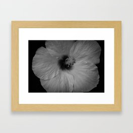 Hawaiian Dreams in Black and White  Framed Art Print