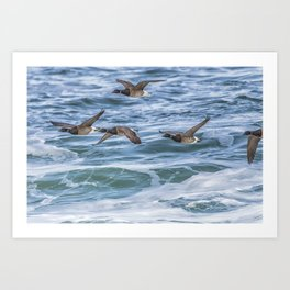 Brent Geese in Flight Art Print