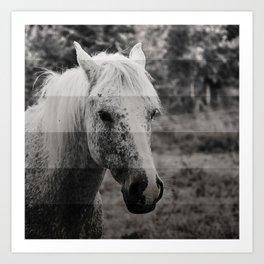 GreyScale Horse Art Print