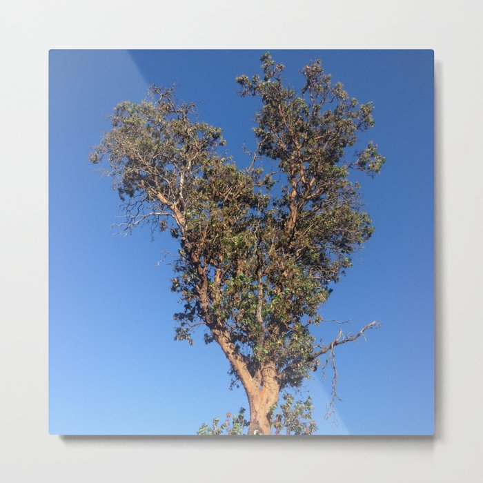 Clear sky heart tree Metal Print