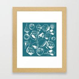 Marco Island Shells Framed Art Print