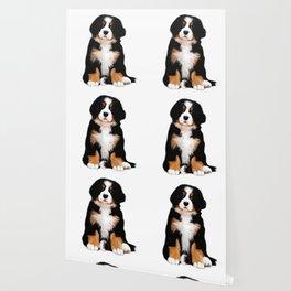 Bernese mountain dog puppy Wallpaper