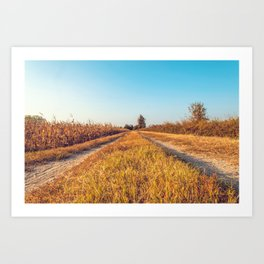 Country dirt road in Lomellina at sunset Art Print