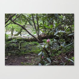 Rhododendron on Abrams Creek Canvas Print