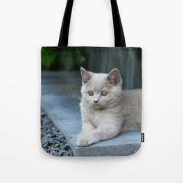 Bikkel the cat ! Tote Bag