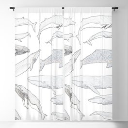 Whales of the world Blackout Curtain