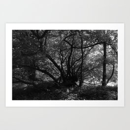 Trees near the River Art Print