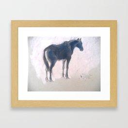 Horse Show 2 - The lone black horse Framed Art Print