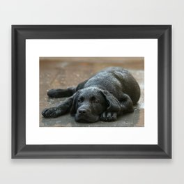 Labrador dog in the rain ! Framed Art Print