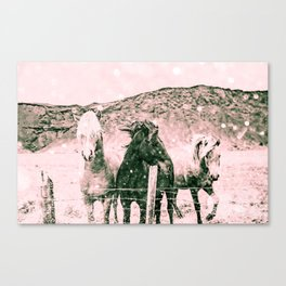 Southwest Horses Black and White Canvas Print