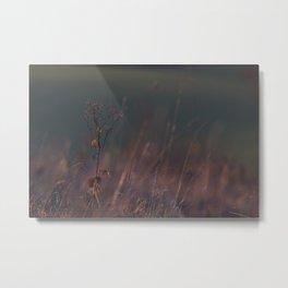 Grasses Metal Print