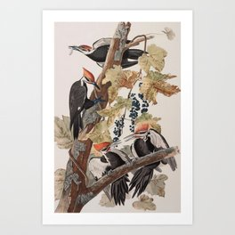 John James Audubon -Woodpecker Art Print