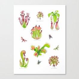 Carnivorous Plants Canvas Print