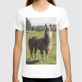 This llama shares its farmland home with a number of goats near the town of South Hero Vermont T-shirt