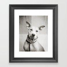 Shelter Dog Portrait Framed Art Print