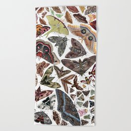 Moths of North America Beach Towel