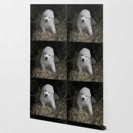 Great Pyrenees Puppy Wallpaper