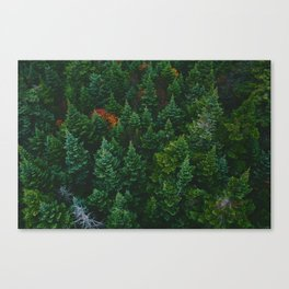 The Lively Forest (Color) Canvas Print
