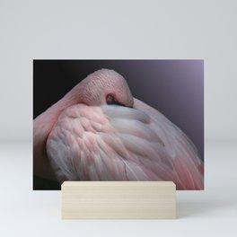 Lesser Flamingo Resting Mini Art Print