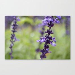 Tall Purple Flowers Canvas Print