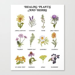 Healing Plants and Herbs Canvas Print